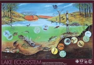 2009.11.19_Ecosystem