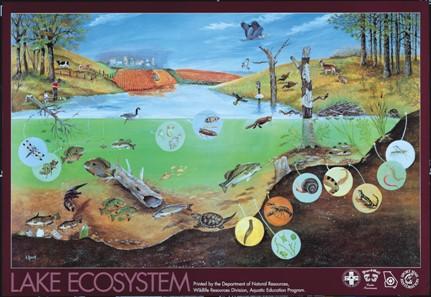 LakeEcosystem_Postersm