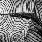 DEDPXL Assignment 02: Repetitive Shape & Form, Pattern, Rhythm