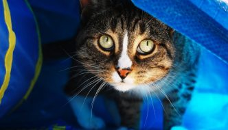 How Do We Know Curiosity Killed The Cat? (Allegedly.)